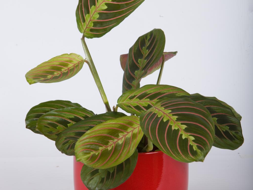 Ochrona kwiatów doniczkowych – jak dbać o kwiaty doniczkowe?