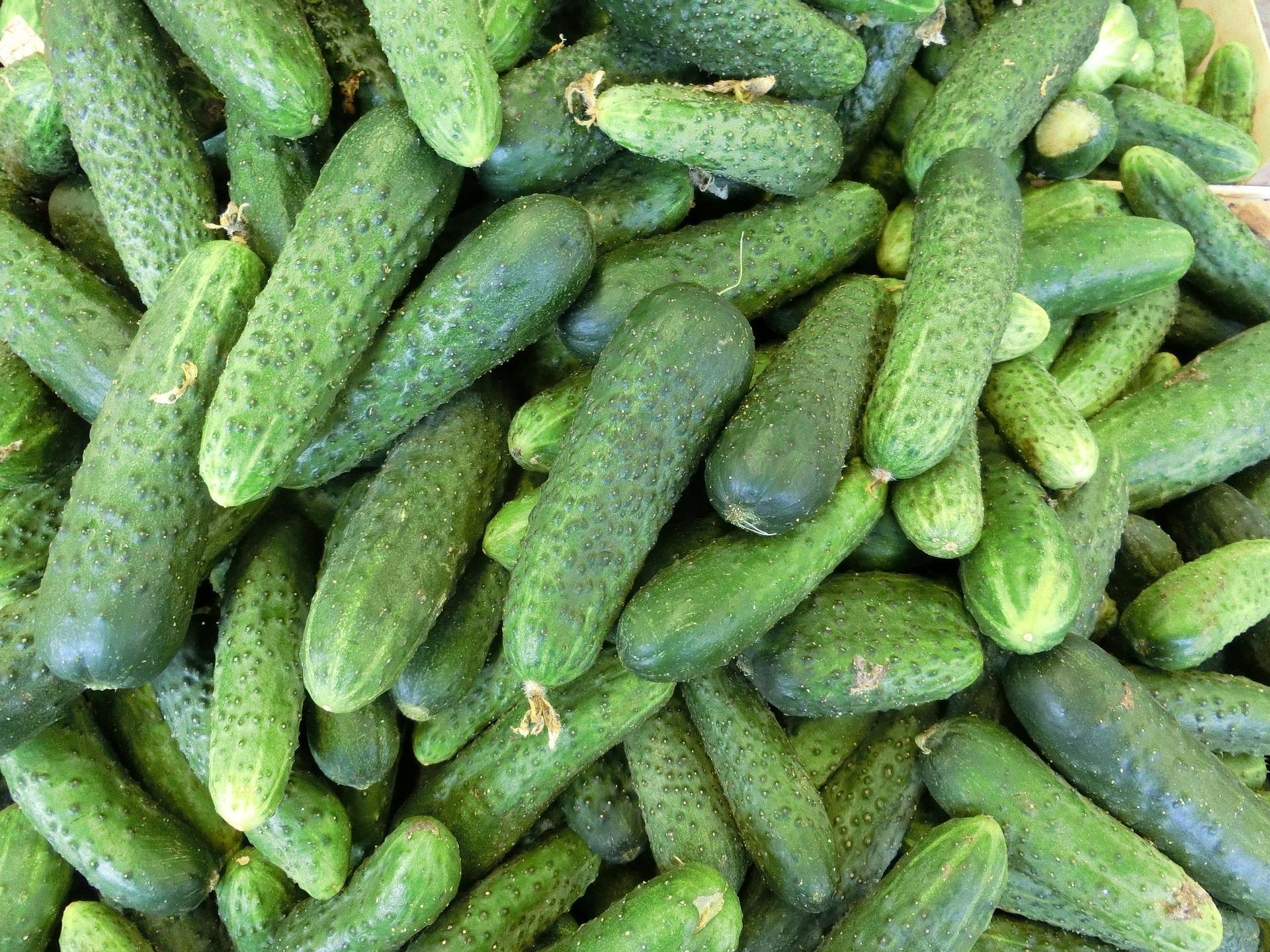 cucumbers-379886_1920